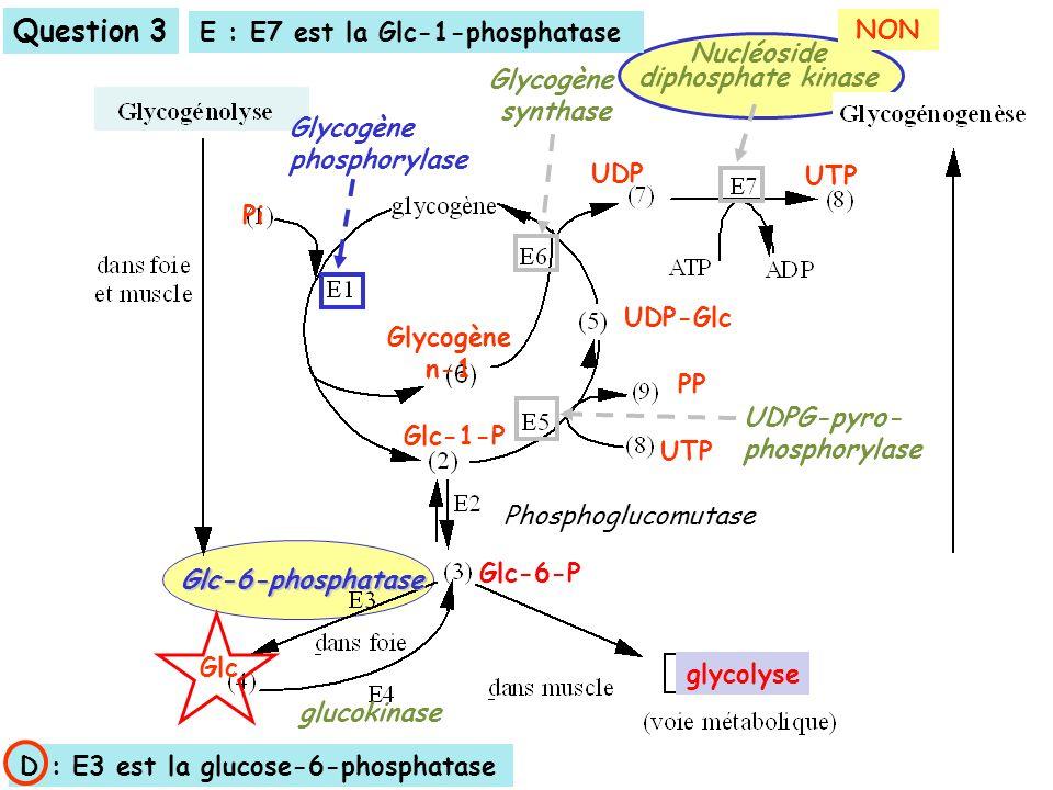 NON Question 3 Pi Glycogène n-1 Glc-1-P Glycogène phosphorylase glycolyse Glc-6-P Phosphoglucomutase glucokinase PP UTP UDP-Glc UDPG-pyro- phosphorylase Glycogène synthase UDP UTP Nucléoside diphosphate kinase GlcGlc-6-phosphatase E : E7 est la Glc-1-phosphatase D : E3 est la glucose-6-phosphatase