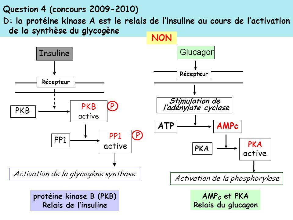 Question 4 (concours 2009-2010) D: la protéine kinase A est le relais de linsuline au cours de lactivation de la synthèse du glycogène protéine kinase B (PKB) Relais de linsuline NON AMP C et PKA Relais du glucagon Récepteur Insuline PKB P PKB active PP1 PP1 active P Activation de la glycogène synthase Récepteur Glucagon Stimulation de ladénylate cyclase ATP AMPc PKA PKA active Activation de la phosphorylase