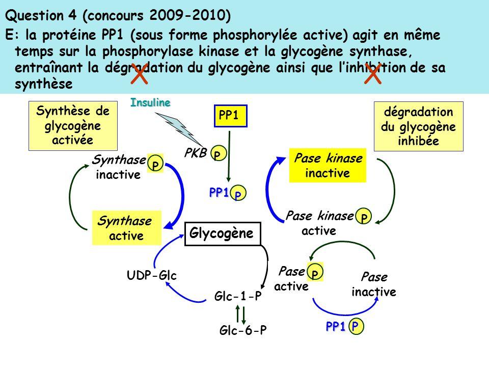 Question 4 (concours 2009-2010) E: la protéine PP1 (sous forme phosphorylée active) agit en même temps sur la phosphorylase kinase et la glycogène synthase, entraînant la dégradation du glycogène ainsi que linhibition de sa synthèse PP1 PKB PP1 PInsuline P Synthase active Synthase inactive P UDP-Glc Glycogène Glc-6-P Glc-1-P Pase kinase inactive Pase kinase active P PP1 PP1 P Pase active Pase inactive P dégradation du glycogène inhibée Synthèse de glycogène activée X X