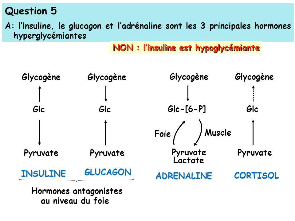 Question 5 A: linsuline, le glucagon et ladrénaline sont les 3 principales hormones hyperglycémiantes NON : linsuline est hypoglycémiante Glycogène Glc Pyruvate INSULINE Hormones antagonistes au niveau du foie Glycogène Glc Pyruvate GLUCAGON Glycogène Glc-[6-P] Pyruvate Lactate ADRENALINE Glycogène Glc Pyruvate CORTISOL Foie Muscle