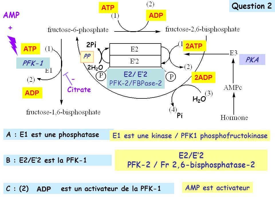 ATP ADP ATP ADP H2OH2O Pi 2H 2 O 2P i PP PFK-1 2ADP 2ATP PKA E2/ E2 PFK-2/FBPase-2 C : (2) est un activateur de la PFK-1 A : E1 est une phosphatase B : E2/E2 est la PFK-1 E1 est une kinase / PFK1 phosphofructokinase Question 2ADP AMP + Citrate - AMP est activateur E2/E2 PFK-2 / Fr 2,6-bisphosphatase-2