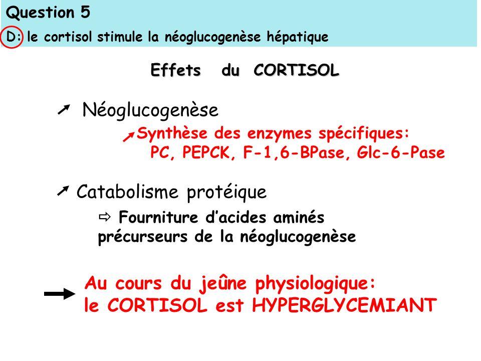Question 5 D: le cortisol stimule la néoglucogenèse hépatique Fourniture dacides aminés précurseurs de la néoglucogenèse Synthèse des enzymes spécifiques: PC, PEPCK, F-1,6-BPase, Glc-6-Pase Au cours du jeûne physiologique: le CORTISOL est HYPERGLYCEMIANT Effets du CORTISOL Néoglucogenèse Catabolisme protéique