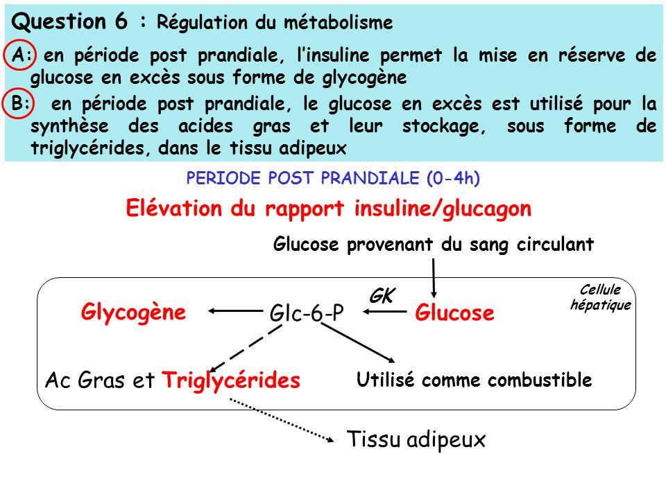 Question 6 : Régulation du métabolisme A: en période post prandiale, linsuline permet la mise en réserve de glucose en excès sous forme de glycogène B: en période post prandiale, le glucose en excès est utilisé pour la synthèse des acides gras et leur stockage, sous forme de triglycérides, dans le tissu adipeux Glucose provenant du sang circulant Glycogène Glc-6-P Glucose Ac Gras et Triglycérides Utilisé comme combustible Elévation du rapport insuline/glucagon GK Tissu adipeux PERIODE POST PRANDIALE (0-4h) Cellule hépatique