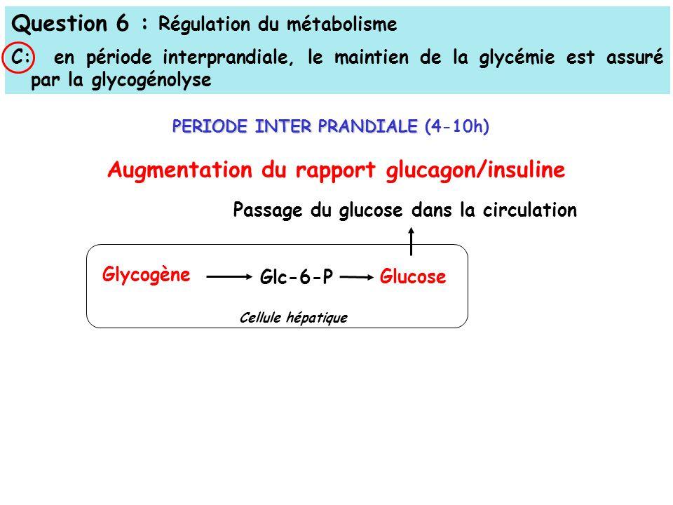 Question 6 : Régulation du métabolisme C: en période interprandiale, le maintien de la glycémie est assuré par la glycogénolyse Passage du glucose dans la circulation Glycogène Glc-6-P Glucose Augmentation du rapport glucagon/insuline PERIODE INTER PRANDIALE PERIODE INTER PRANDIALE (4-10h) Cellule hépatique