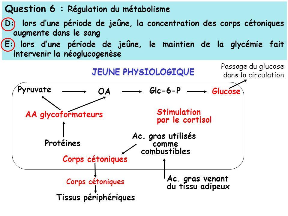 Question 6 : Régulation du métabolisme D: lors dune période de jeûne, la concentration des corps cétoniques augmente dans le sang E: lors dune période de jeûne, le maintien de la glycémie fait intervenir la néoglucogenèse Passage du glucose dans la circulation Pyruvate Glc-6-P Glucose Ac.