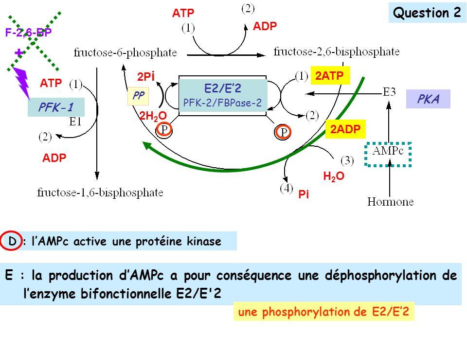 E : la production dAMPc a pour conséquence une déphosphorylation de lenzyme bifonctionnelle E2/E 2 ATP ADP ATP ADP H2OH2O Pi 2H 2 O 2P i PP PFK-1 E2/E2 PFK-2/FBPase-2 Question 2 F-2,6-BP + D : lAMPc active une protéine kinase une phosphorylation de E2/E2 PKA 2ADP 2ATP