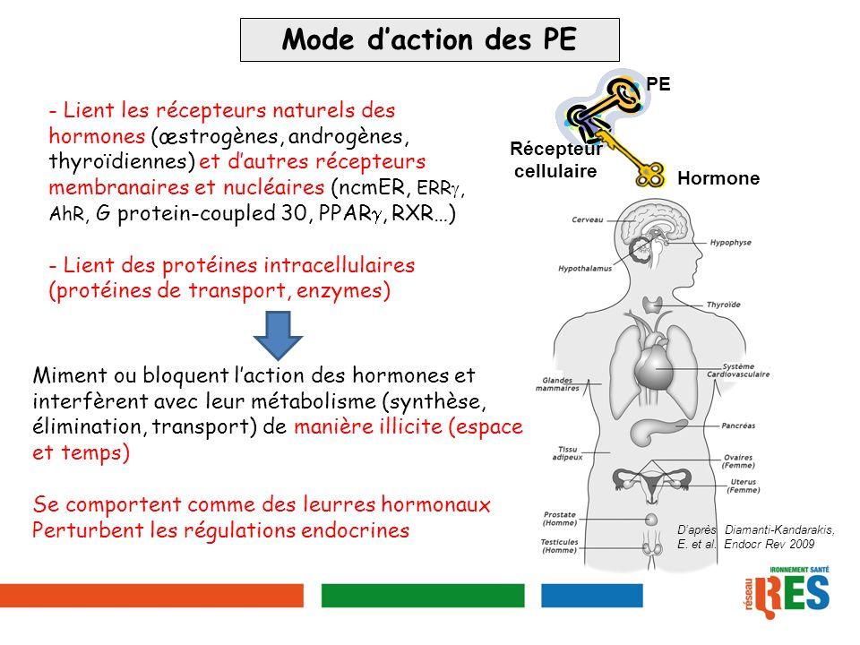 Mode daction des PE - Lient les récepteurs naturels des hormones (œstrogènes, androgènes, thyroïdiennes) et dautres récepteurs membranaires et nucléai