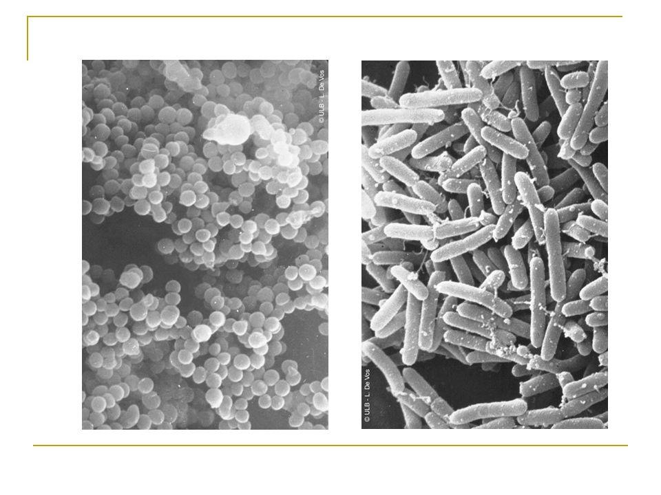 « Faut-il traiter une BMR ?» On ne traite pas une BMR mais une INFECTION à BMR Infection : le germe identifié, sur un prélèvement réalisé dans un but diagnostic, est responsable dune infection clinique.
