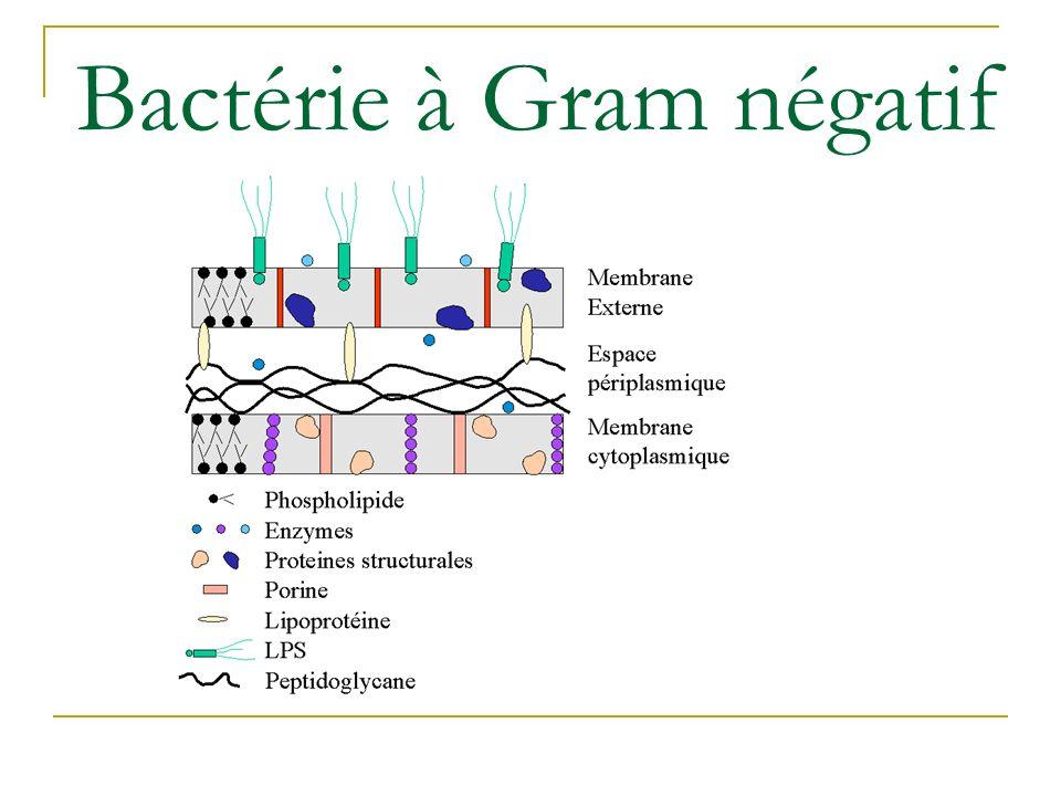 Antibiotiques sites daction Inhibition de la synthèse des peptidoglycanes o ßlactamines, vancomycine, teicoplanine, fosfo.