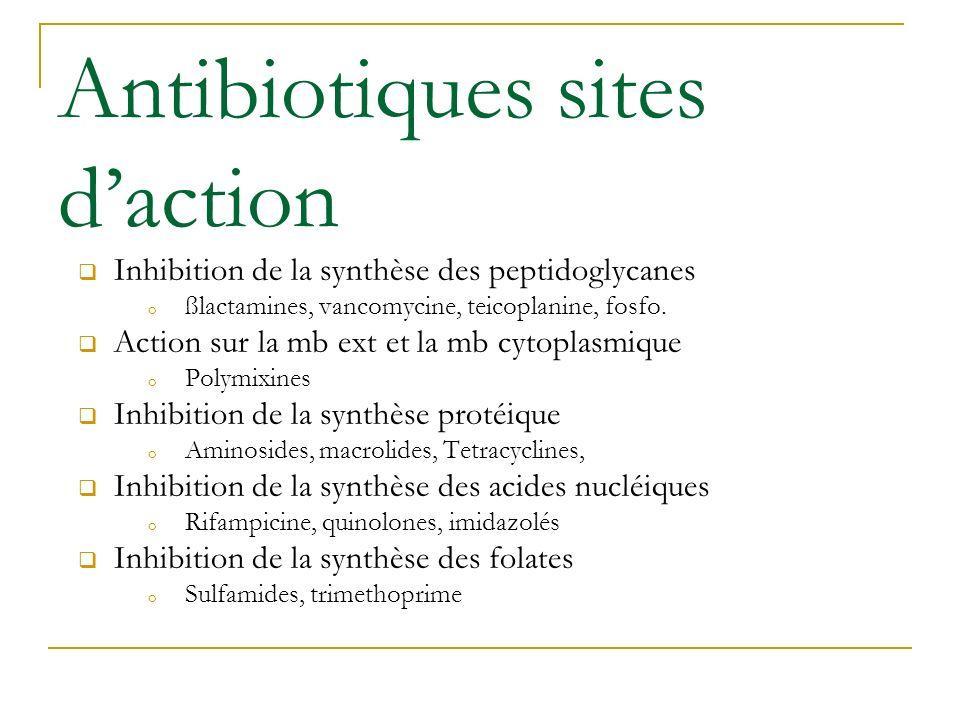 Antibiotiques sites daction Inhibition de la synthèse des peptidoglycanes o ßlactamines, vancomycine, teicoplanine, fosfo. Action sur la mb ext et la