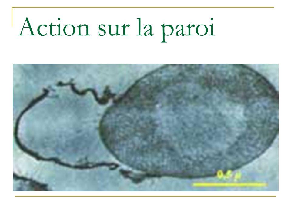 Antiseptiques Préparations ayant la propriété déliminer ou de tuer les micro- organismes ou dinactiver les virus des tissus vivants (peau saine, muqueuses, plaies).