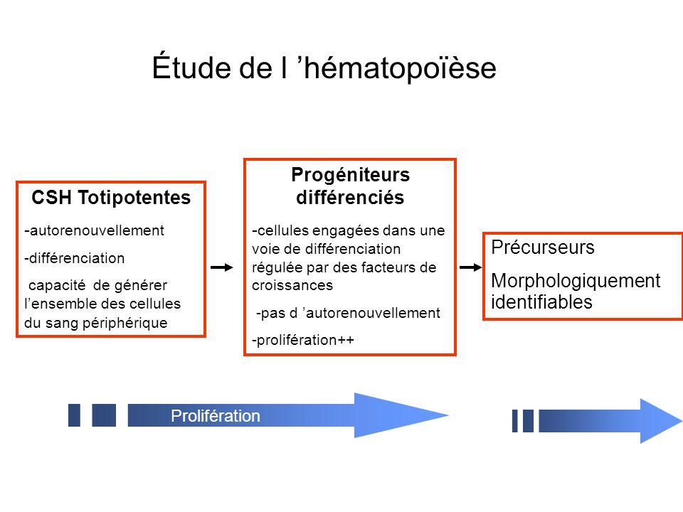 CSH Totipotentes - autorenouvellement -différenciation capacité de générer lensemble des cellules du sang périphérique Précurseurs Morphologiquement identifiables Prolifération Maturation Progéniteurs différenciés - cellules engagées dans une voie de différenciation régulée par des facteurs de croissances -pas d autorenouvellement -prolifération++ Étude de l hématopoïèse