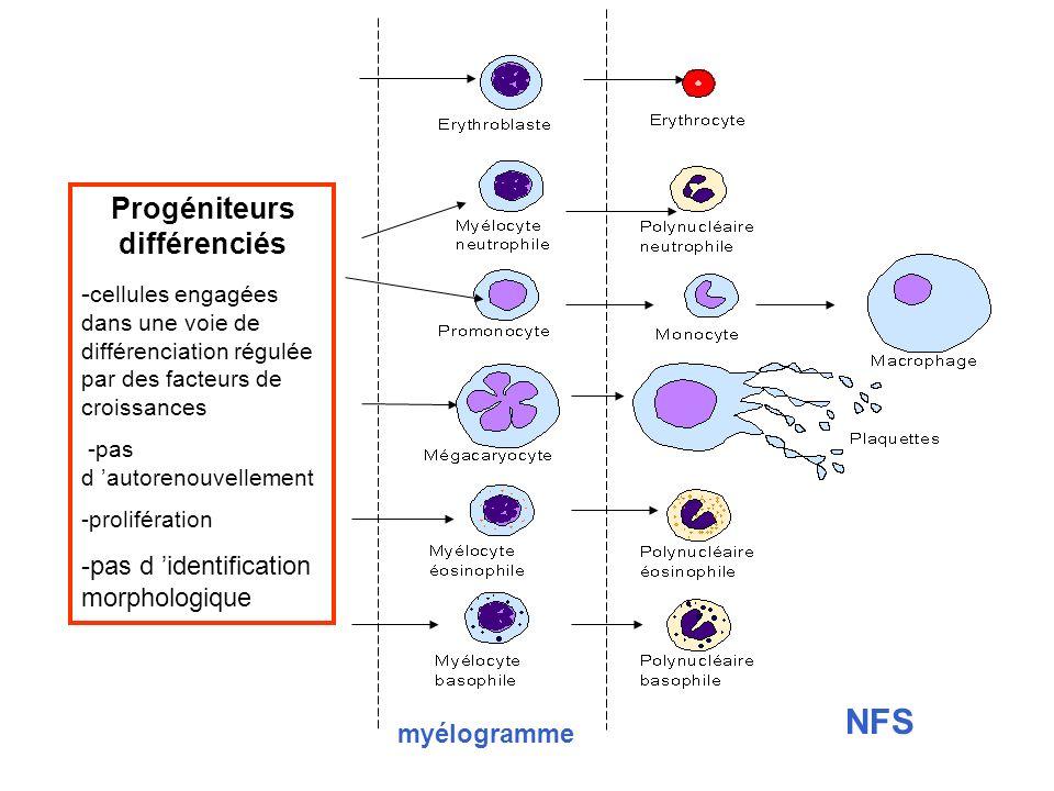 myélogramme NFS ? Progéniteurs différenciés - cellules engagées dans une voie de différenciation régulée par des facteurs de croissances -pas d autore
