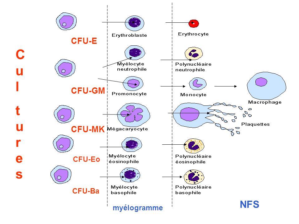 myélogramme NFS CulturesCultures CFU-GM CFU-MK CFU-E CFU-Eo CFU-Ba