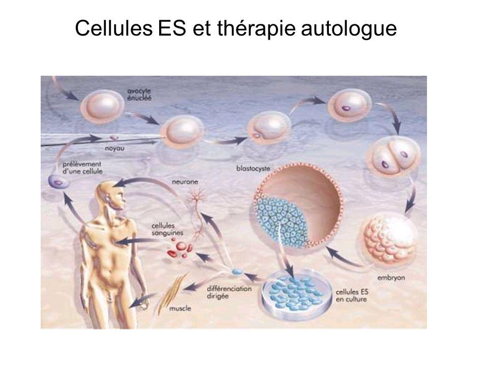 Cellules ES et thérapie autologue