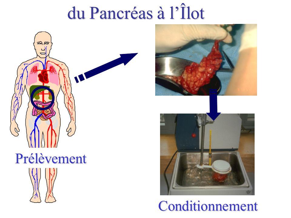 Prélèvement Conditionnement du Pancréas à lÎlot