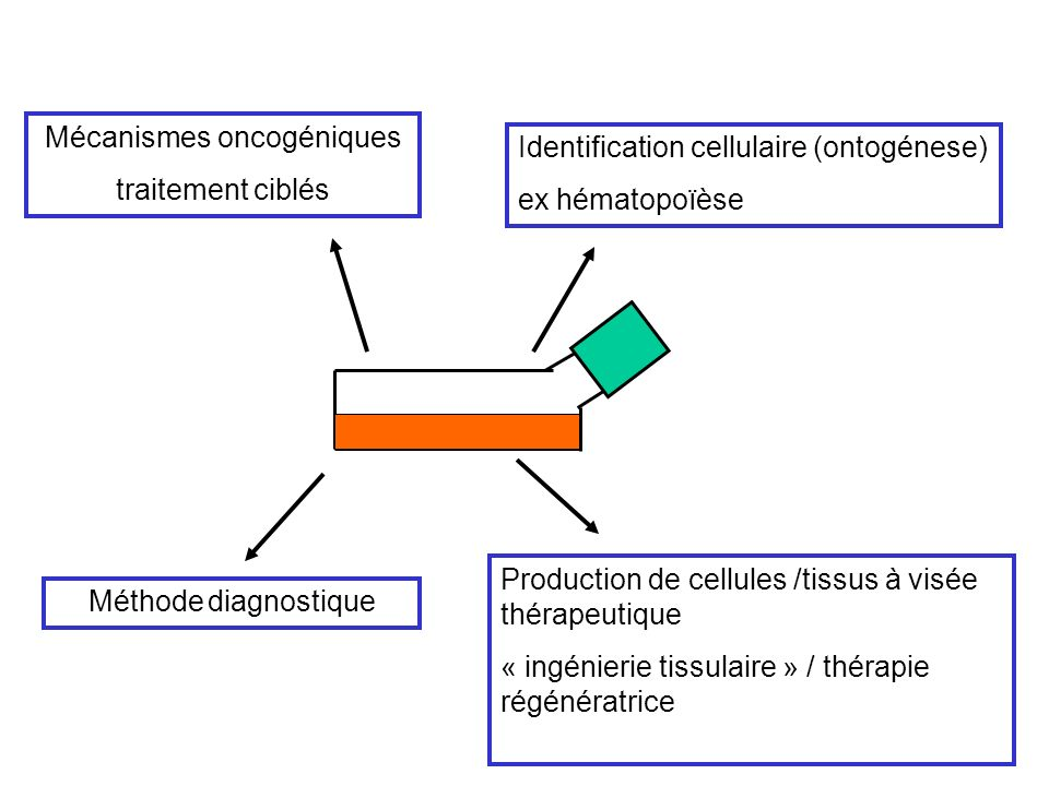 Mécanismes oncogéniques traitement ciblés Identification cellulaire (ontogénese) ex hématopoïèse Production de cellules /tissus à visée thérapeutique « ingénierie tissulaire » / thérapie régénératrice Méthode diagnostique