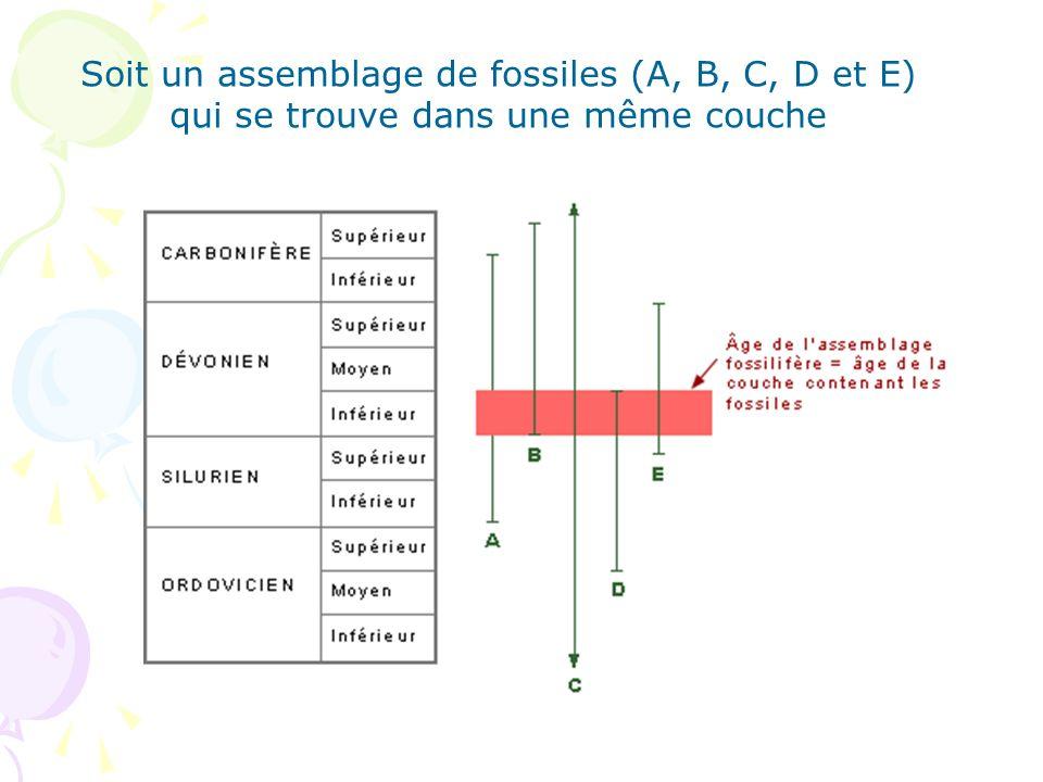Soit un assemblage de fossiles (A, B, C, D et E) qui se trouve dans une même couche