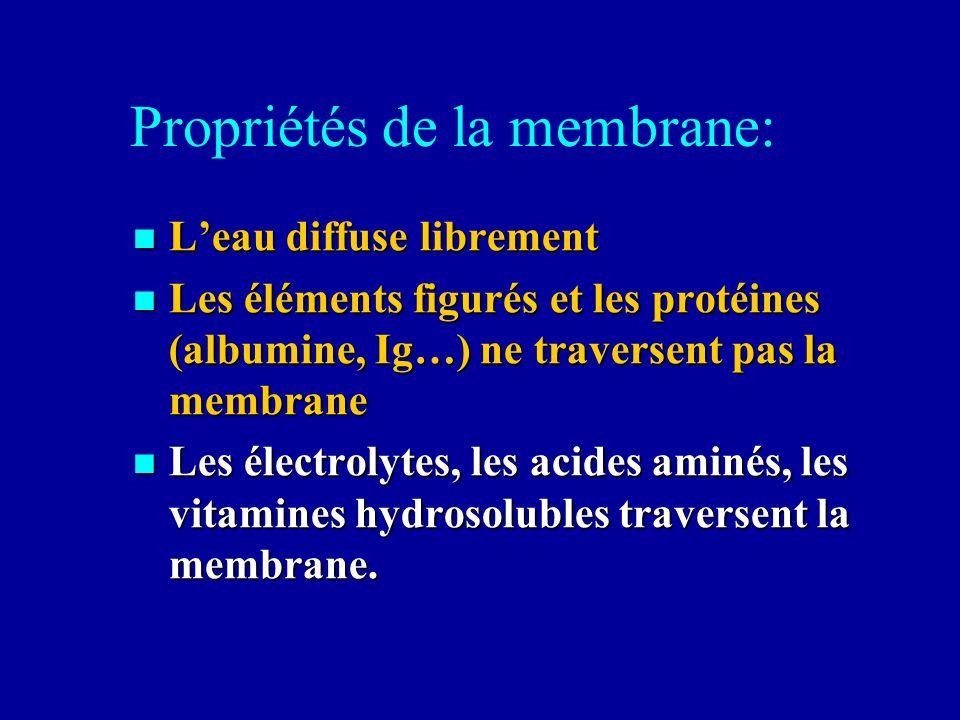 Propriétés de la membrane: Leau diffuse librement Leau diffuse librement Les éléments figurés et les protéines (albumine, Ig…) ne traversent pas la me