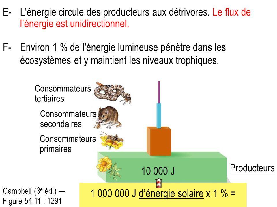 E-L énergie circule des producteurs aux détrivores.