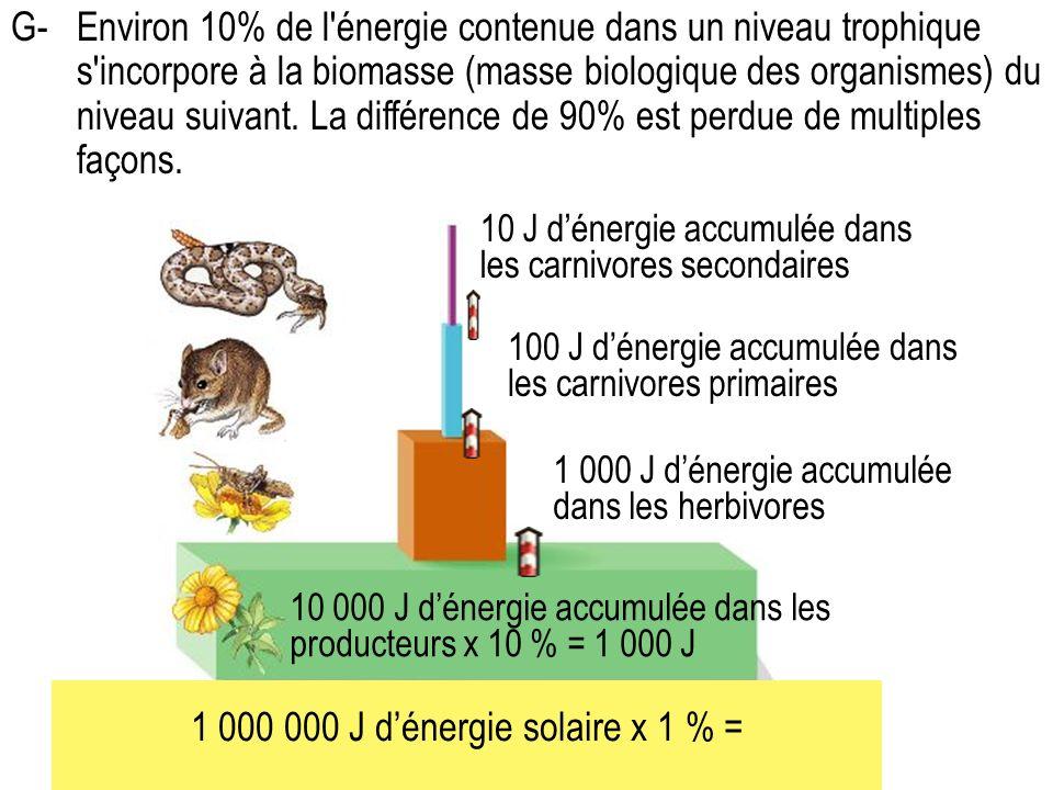 G-Environ 10% de l énergie contenue dans un niveau trophique s incorpore à la biomasse (masse biologique des organismes) du niveau suivant.