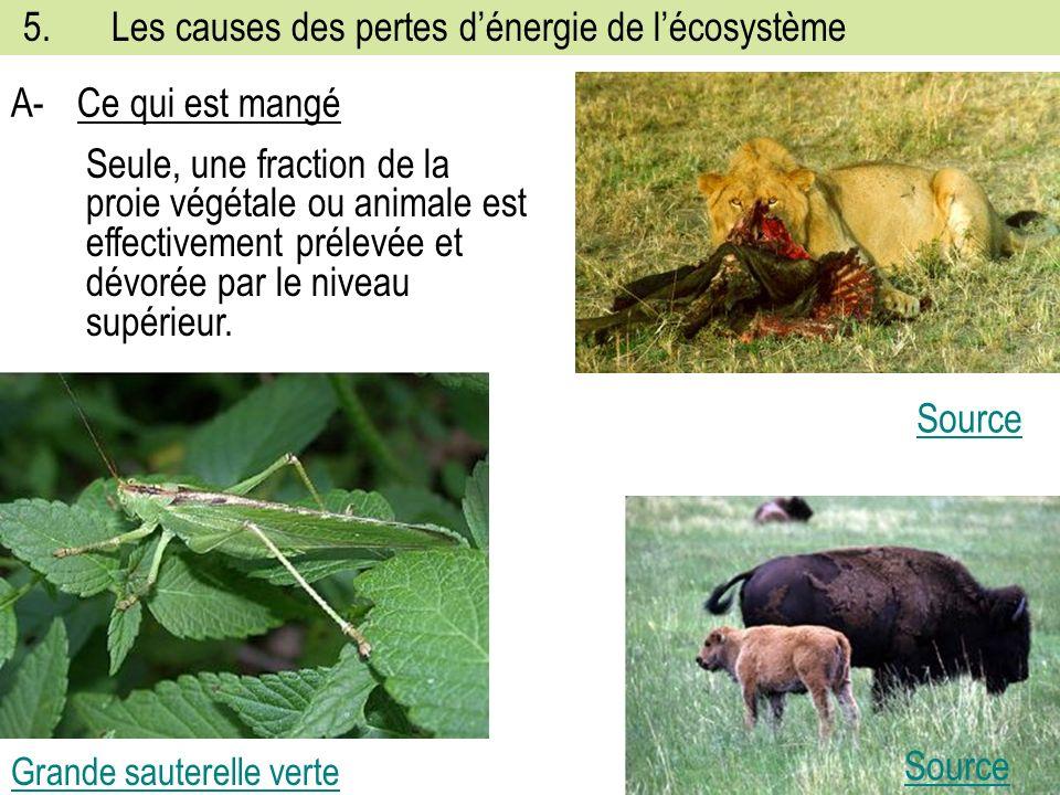 5.Les causes des pertes dénergie de lécosystème Grande sauterelle verte A-Ce qui est mangé Source Seule, une fraction de la proie végétale ou animale est effectivement prélevée et dévorée par le niveau supérieur.
