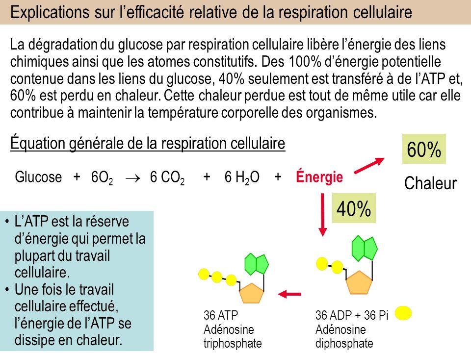 La dégradation du glucose par respiration cellulaire libère lénergie des liens chimiques ainsi que les atomes constitutifs.