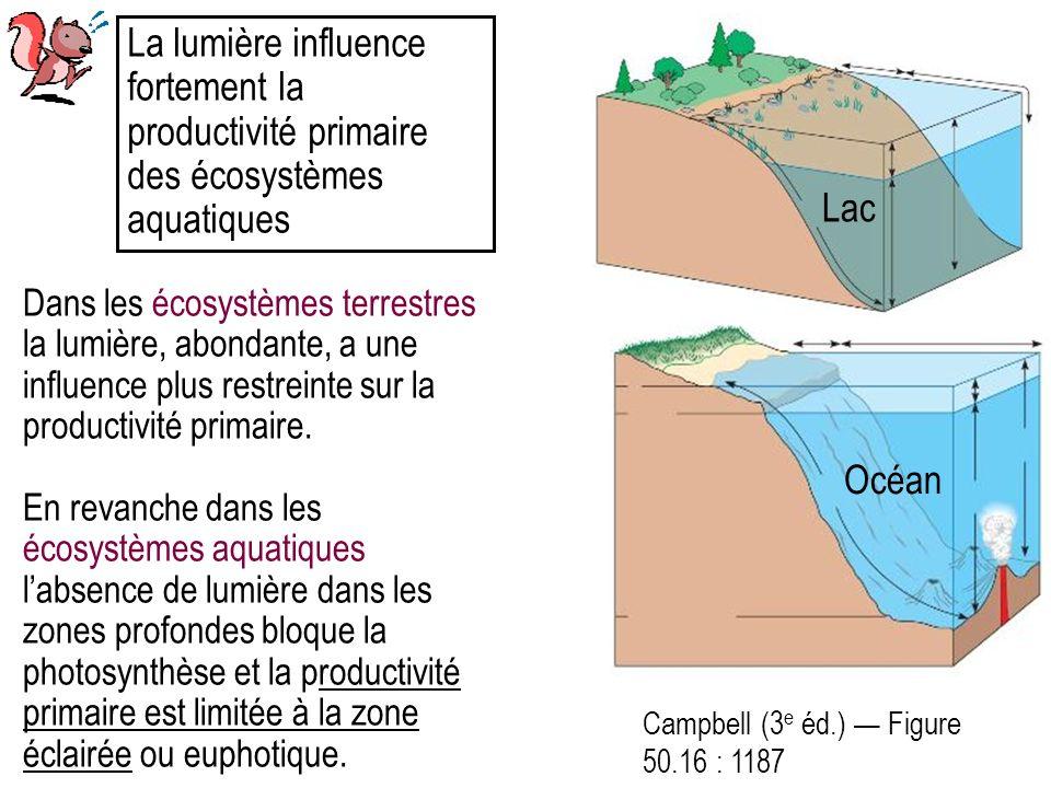 Campbell (3 e éd.) Figure 50.16 : 1187 La lumière influence fortement la productivité primaire des écosystèmes aquatiques Dans les écosystèmes terrestres la lumière, abondante, a une influence plus restreinte sur la productivité primaire.