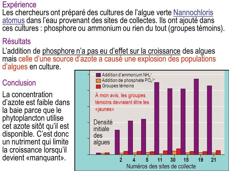 Expérience Les chercheurs ont préparé des cultures de lalgue verte Nannochloris atomus dans leau provenant des sites de collectes.
