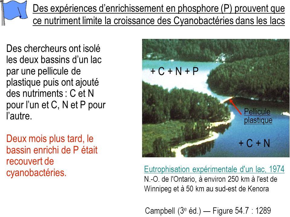 Des chercheurs ont isolé les deux bassins dun lac par une pellicule de plastique puis ont ajouté des nutriments : C et N pour lun et C, N et P pour lautre.