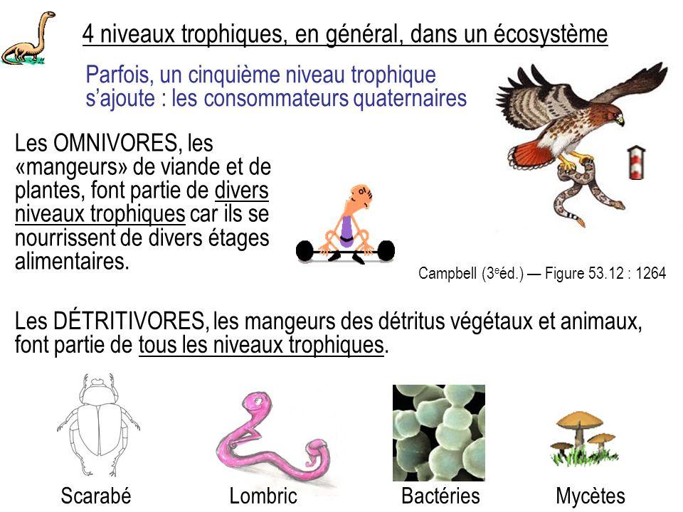 4 niveaux trophiques, en général, dans un écosystème BactériesMycètes Les OMNIVORES, les «mangeurs» de viande et de plantes, font partie de divers niveaux trophiques car ils se nourrissent de divers étages alimentaires.