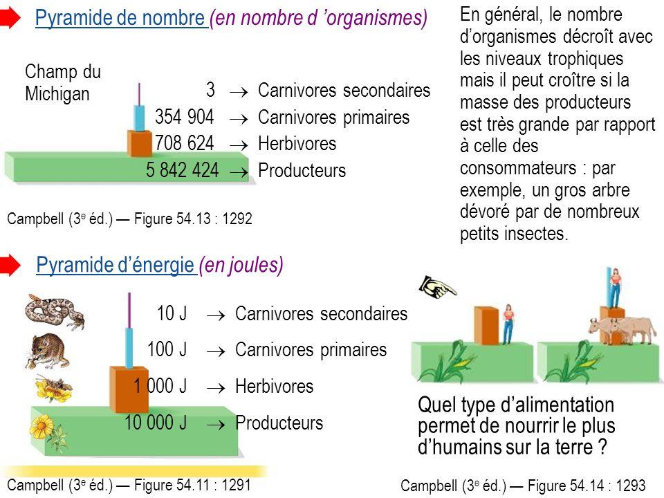 Pyramide de nombre (en nombre d organismes) Pyramide dénergie (en joules) 3 Carnivores secondaires 354 904 Carnivores primaires 708 624 Herbivores 5 842 424 Producteurs Champ du Michigan Campbell (3 e éd.) Figure 54.13 : 1292 Campbell (3 e éd.) Figure 54.11 : 1291 En général, le nombre dorganismes décroît avec les niveaux trophiques mais il peut croître si la masse des producteurs est très grande par rapport à celle des consommateurs : par exemple, un gros arbre dévoré par de nombreux petits insectes.