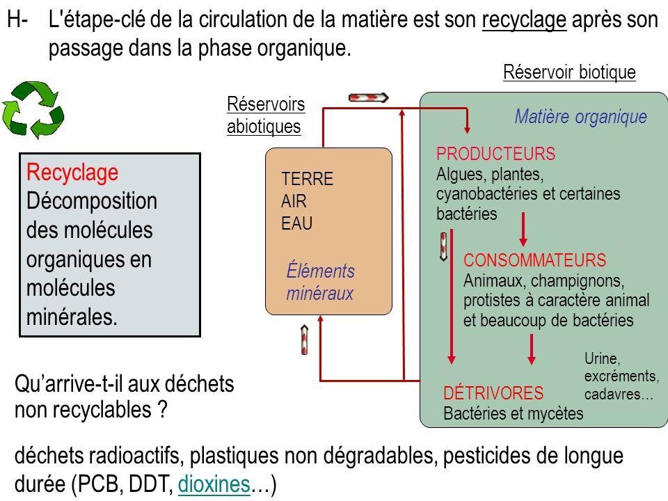 PRODUCTEURS Algues, plantes, cyanobactéries et certaines bactéries CONSOMMATEURS Animaux, champignons, protistes à caractère animal et beaucoup de bactéries DÉTRIVORES Bactéries et mycètes Matière organique Réservoirs abiotiques TERRE AIR EAU Éléments minéraux Réservoir biotique H-L étape-clé de la circulation de la matière est son recyclage après son passage dans la phase organique.