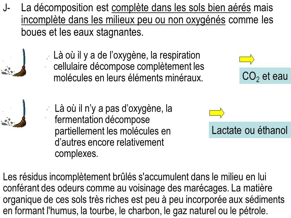 Là où il y a de loxygène, la respiration cellulaire décompose complètement les molécules en leurs éléments minéraux.