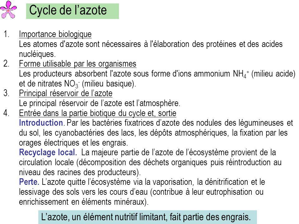 Cycle de lazote 1.