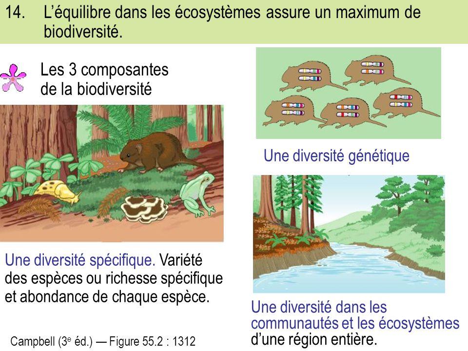 14.Léquilibre dans les écosystèmes assure un maximum de biodiversité.