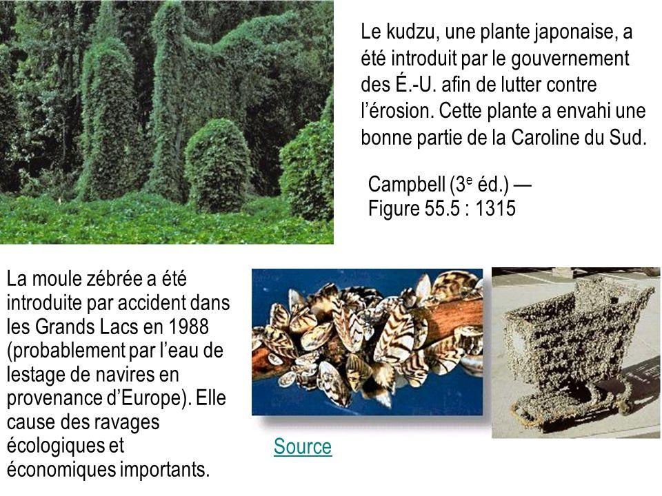 Le kudzu, une plante japonaise, a été introduit par le gouvernement des É.-U.