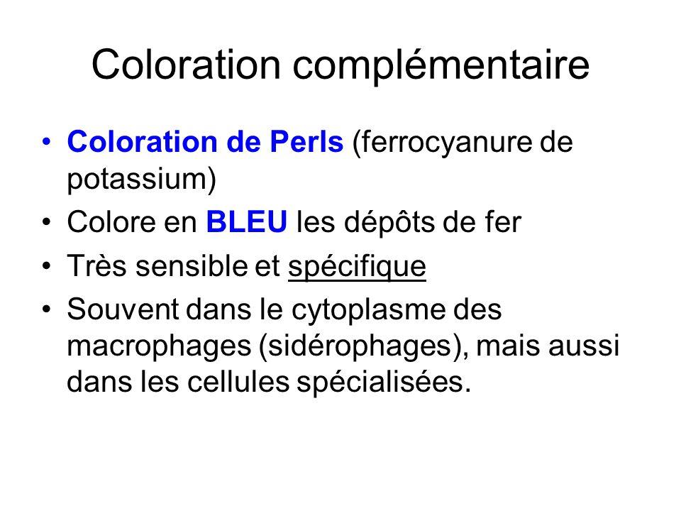 Coloration complémentaire Coloration de Perls (ferrocyanure de potassium) Colore en BLEU les dépôts de fer Très sensible et spécifique Souvent dans le