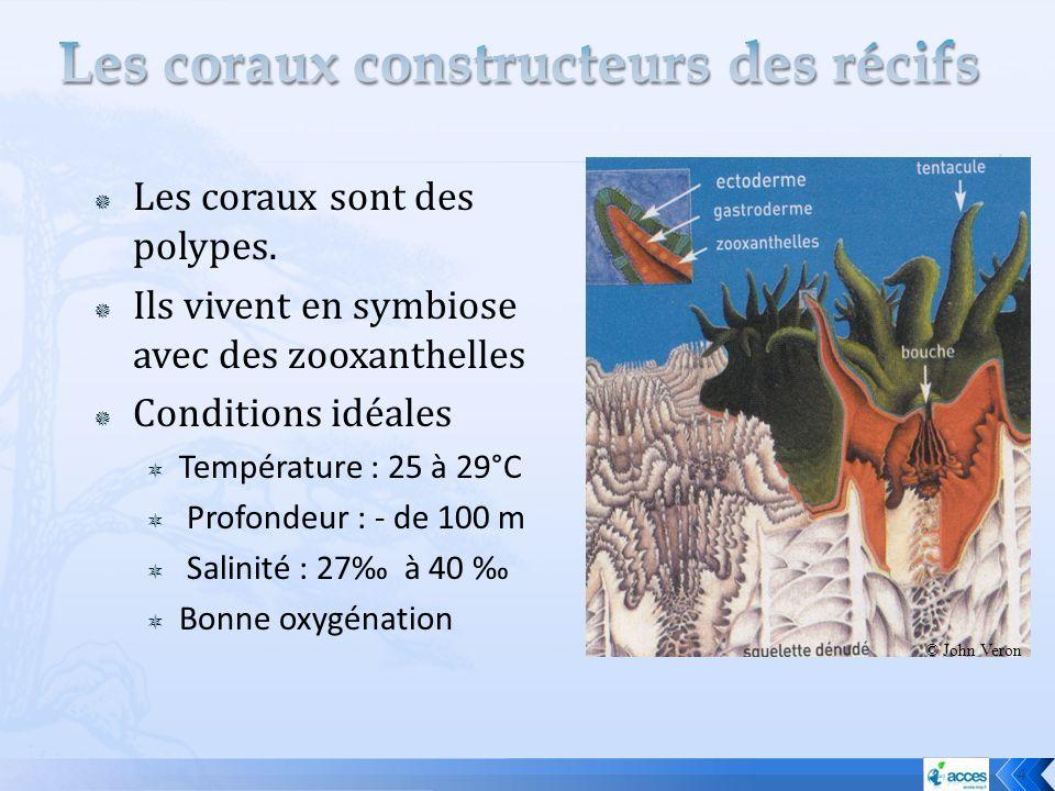 Les coraux sont des polypes. Ils vivent en symbiose avec des zooxanthelles Conditions idéales Température : 25 à 29°C Profondeur : - de 100 m Salinité