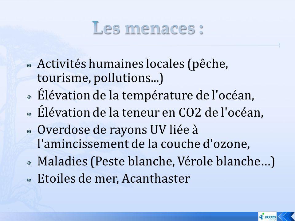 Activités humaines locales (pêche, tourisme, pollutions...) Élévation de la température de l'océan, Élévation de la teneur en CO2 de l'océan, Overdose