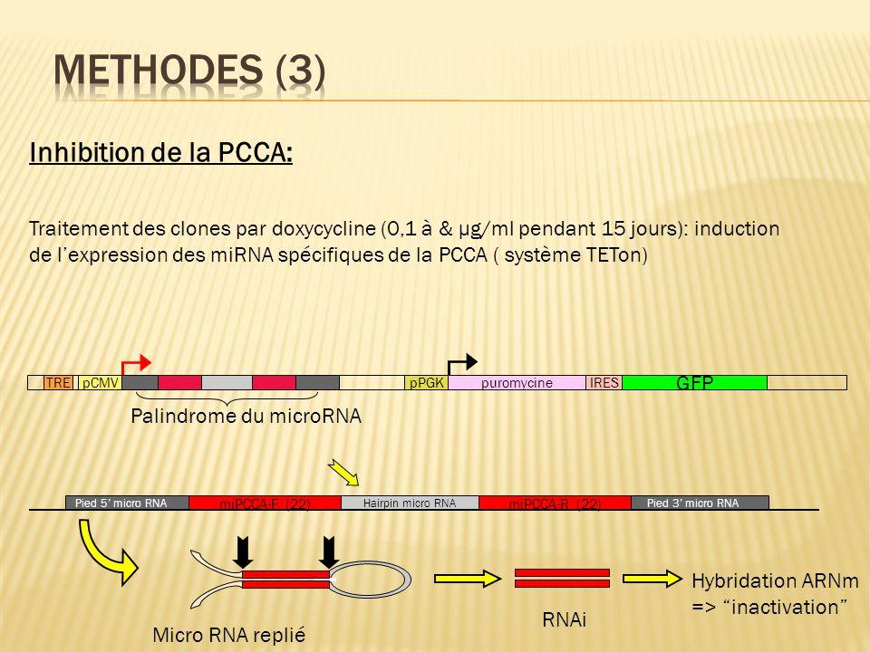 TREpCMV Palindrome du microRNA pPGKpuromycineIRES GFP miPCCA-F (22)miPCCA-R (22) Hairpin micro RNA Pied 5 micro RNAPied 3 micro RNA Micro RNA replié R