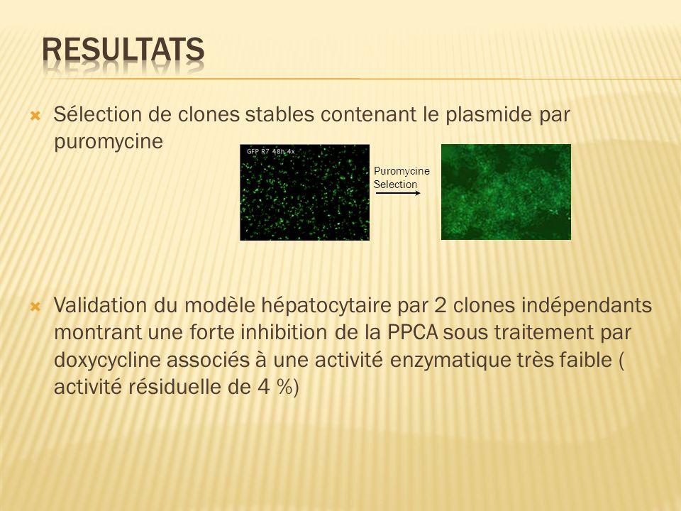 Sélection de clones stables contenant le plasmide par puromycine Validation du modèle hépatocytaire par 2 clones indépendants montrant une forte inhib