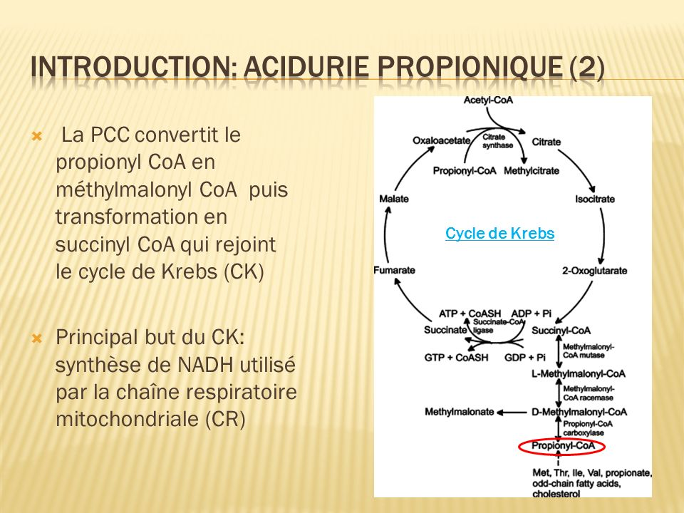 La PCC convertit le propionyl CoA en méthylmalonyl CoA puis transformation en succinyl CoA qui rejoint le cycle de Krebs (CK) Principal but du CK: syn