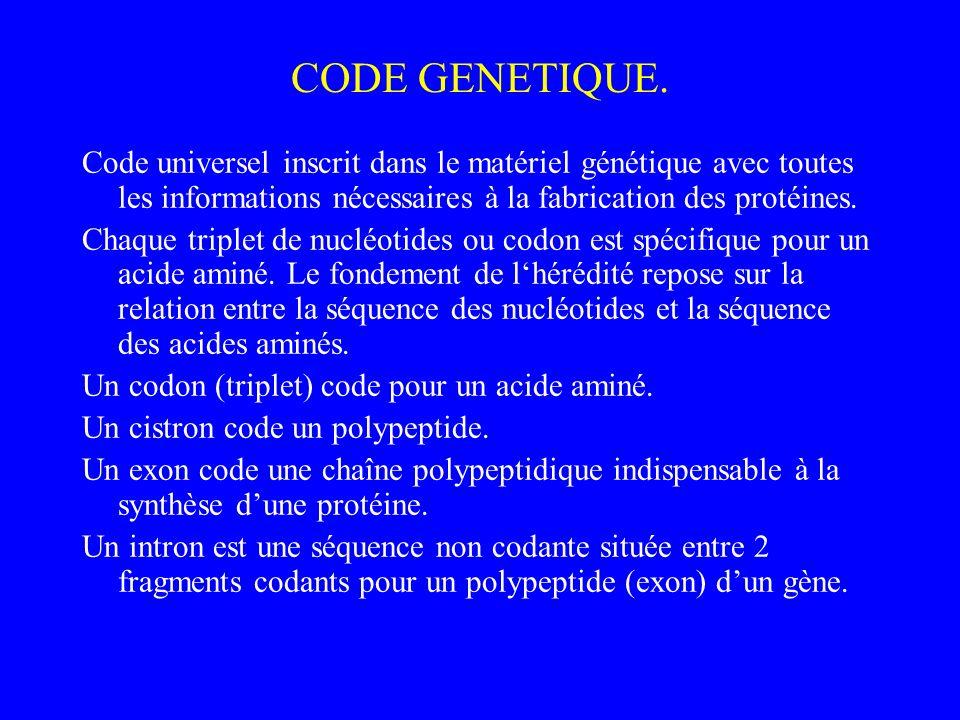 CODE GENETIQUE. Code universel inscrit dans le matériel génétique avec toutes les informations nécessaires à la fabrication des protéines. Chaque trip