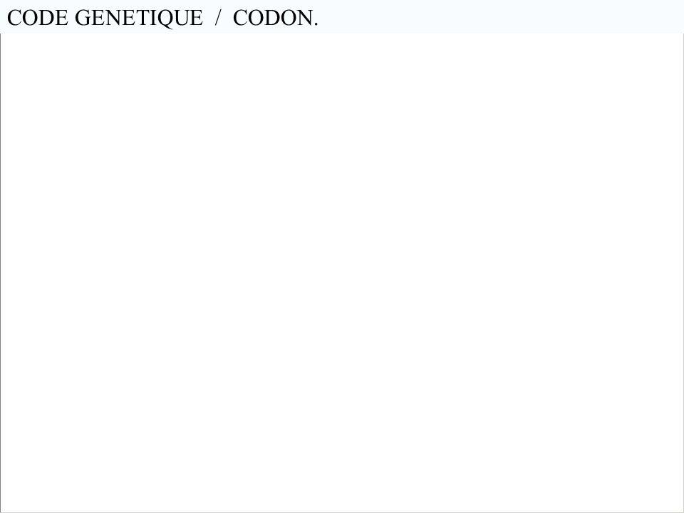 CODE GENETIQUE / CODON. En génétique, les codons sont des triplets de nucléotides (A-Tou U, C-G) Il existe 4³ = 64 combinaisons possibles de ces 4 let