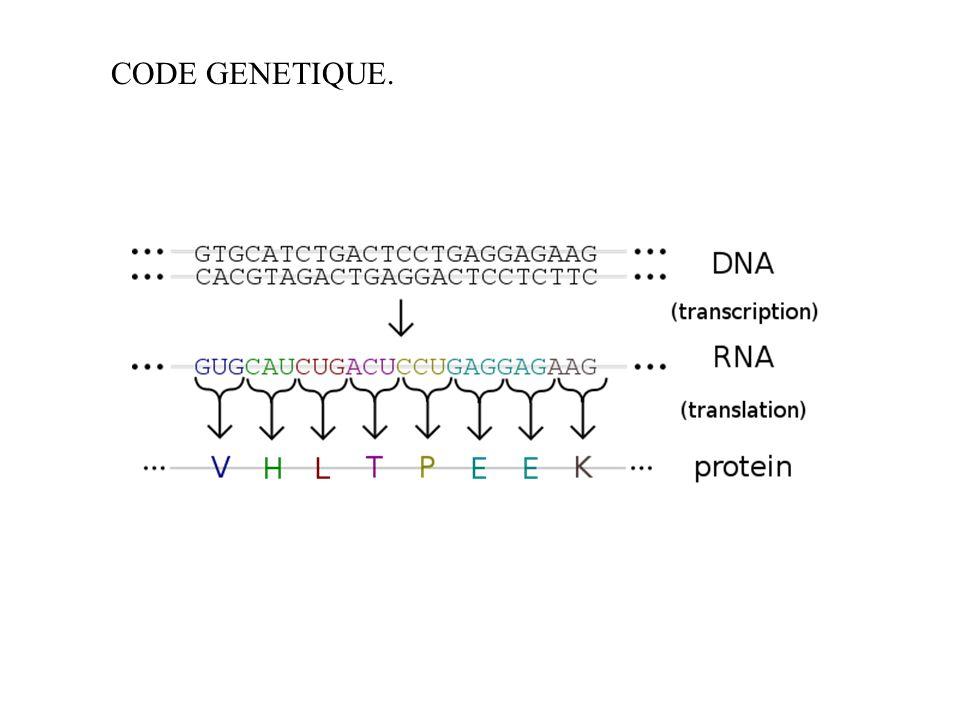 CCODE GENETIQUE.