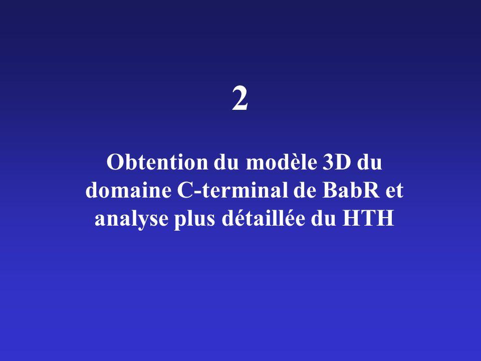 Obtention du modèle 3D du domaine C-terminal de BabR et analyse plus détaillée du HTH 2