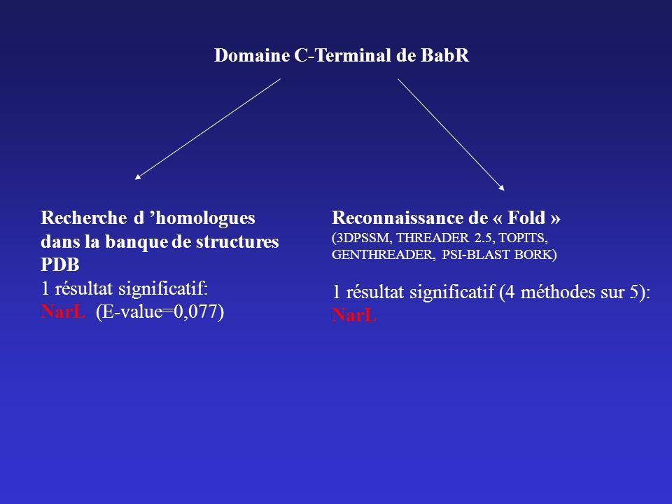 Domaine C-Terminal de BabR Recherche d homologues dans la banque de structures PDB 1 résultat significatif: NarL (E-value=0,077) Reconnaissance de « Fold » (3DPSSM, THREADER 2.5, TOPITS, GENTHREADER, PSI-BLAST BORK) 1 résultat significatif (4 méthodes sur 5): NarL
