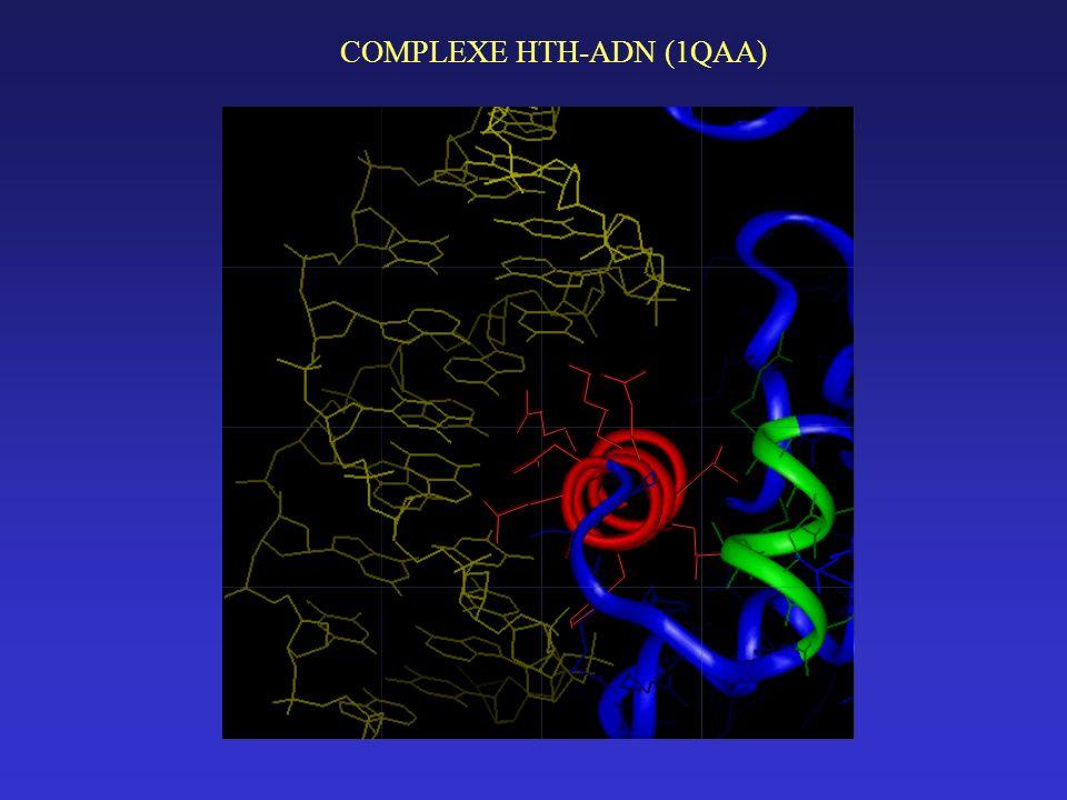 COMPLEXE HTH-ADN (1QAA)