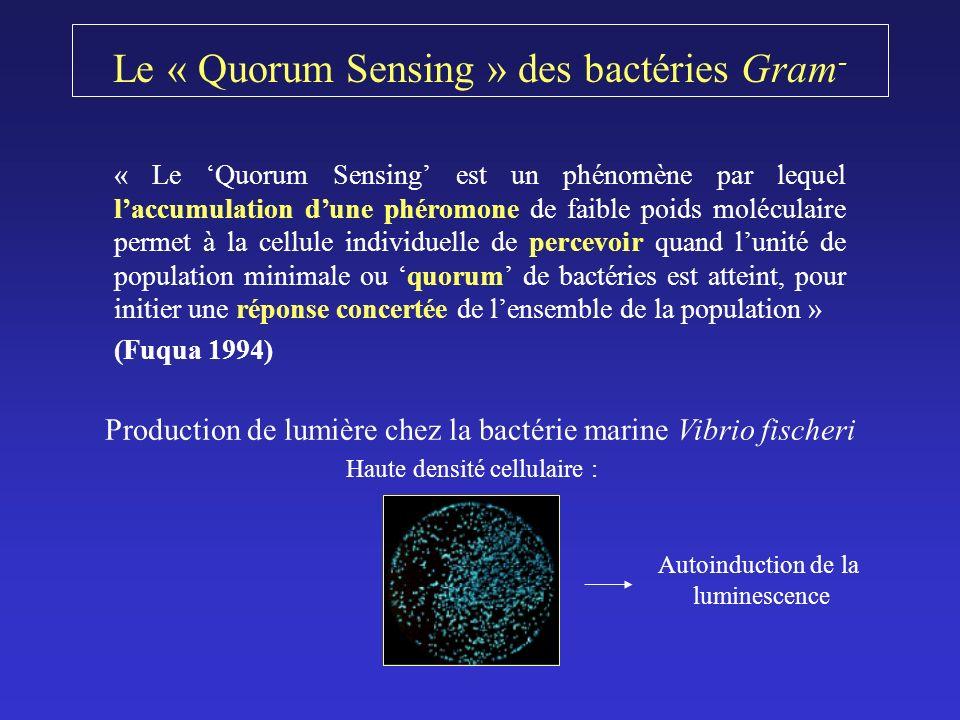 Le « Quorum Sensing » des bactéries Gram - « Le Quorum Sensing est un phénomène par lequel laccumulation dune phéromone de faible poids moléculaire permet à la cellule individuelle de percevoir quand lunité de population minimale ou quorum de bactéries est atteint, pour initier une réponse concertée de lensemble de la population » (Fuqua 1994) Production de lumière chez la bactérie marine Vibrio fischeri Haute densité cellulaire : Autoinduction de la luminescence